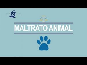 Noticiero Judicial: Cápsula Educativa – Maltrato animal